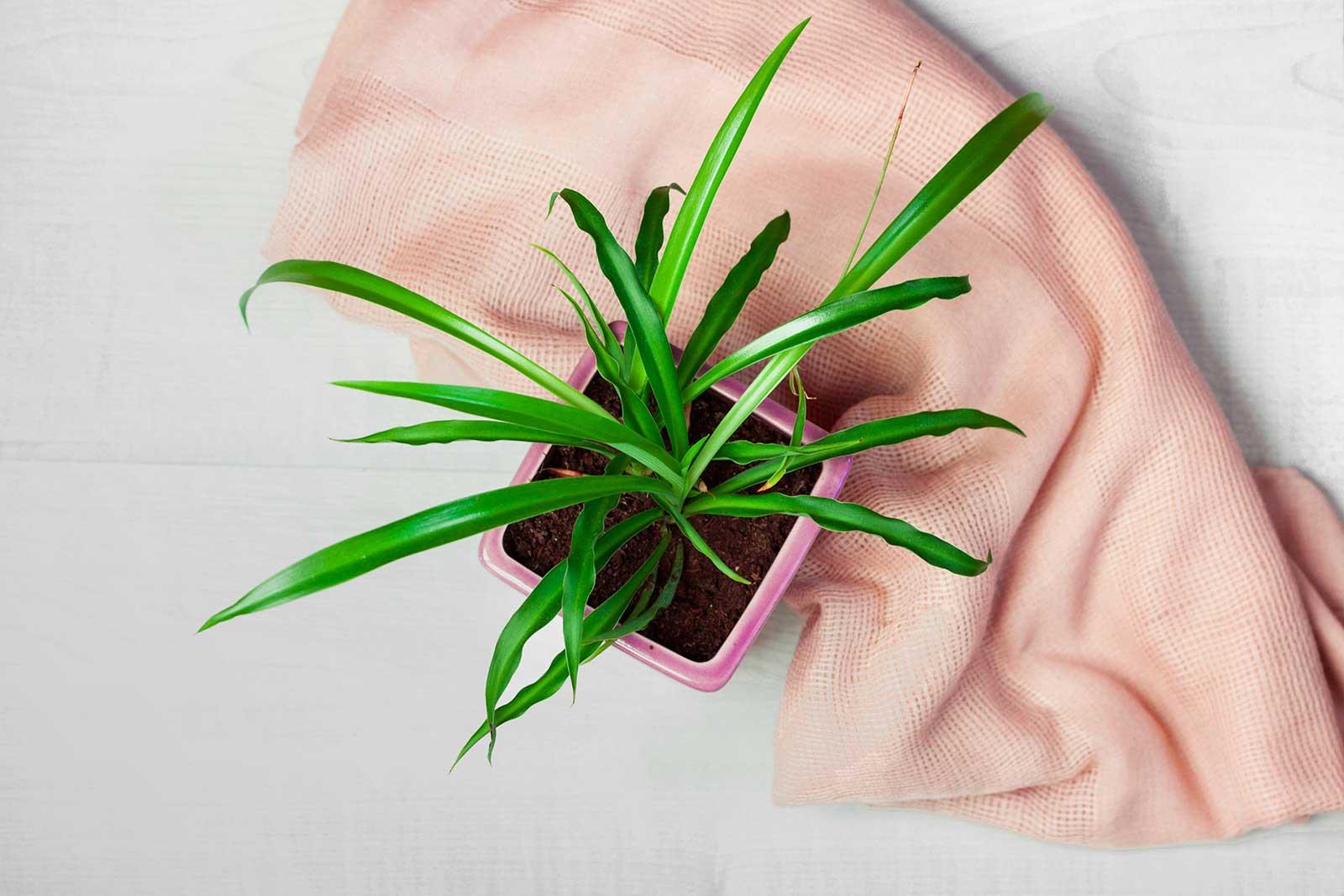 Zdjęcie produktowe - Roślina