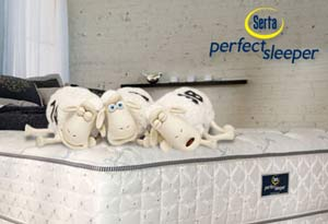 Sheep sleeping on a serta mattress