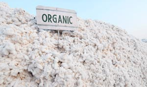 lot of cotton for organic mattress production
