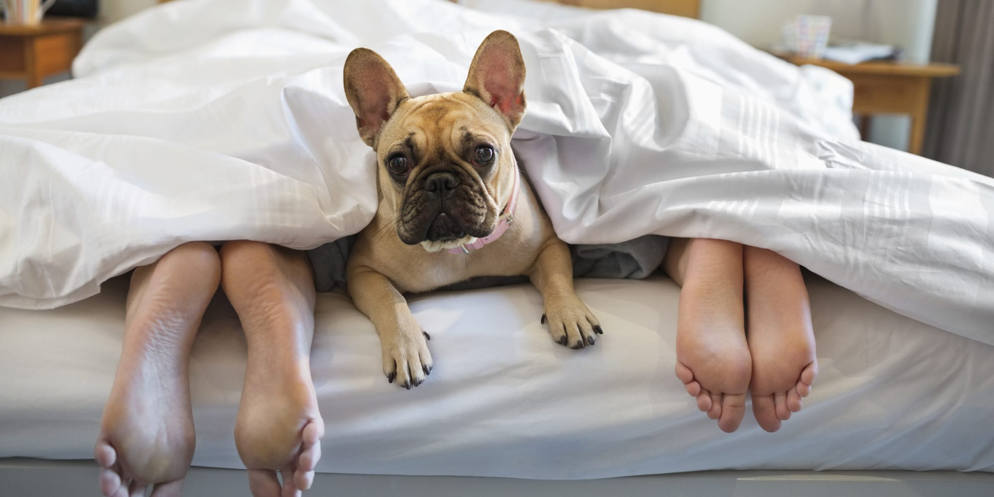 7 Tips to Extend your Mattress' Lifespan