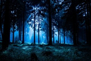 Image: A forest in the dead of night
