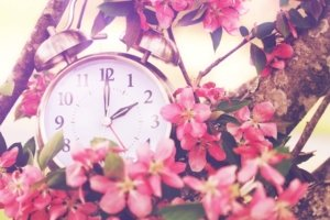 Image: clock in a tree in bloom, representing Daylight Savings Time