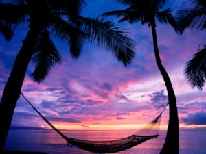 Image: hammock strung between two palm trees against a purple-pink sunset