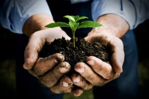 Image: cupped hands hold earth from which a seedling sprouts