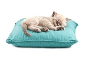 Image: kitten curled up asleep on pillow