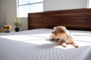 a dog resting on the mattress