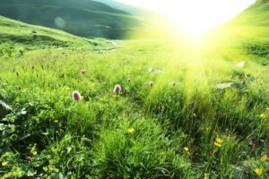 Image: sunlight streaming over a gorgeous meadow