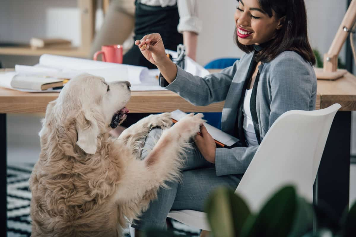 animals in the workplace, taking your pet to work, pets in the workplace