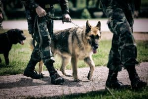 K-9 Four-Legged Heroes