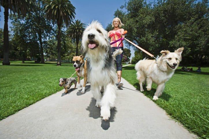 dog, dogs, dog day