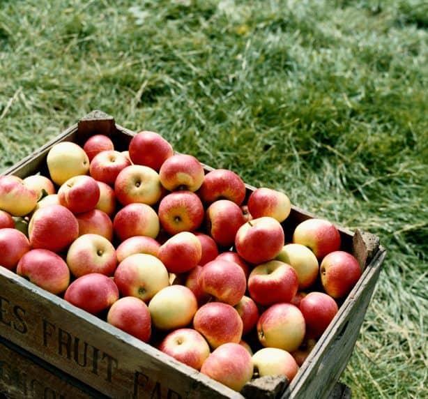apple day, apples