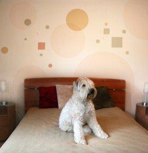 Adopting a Designer Dogs