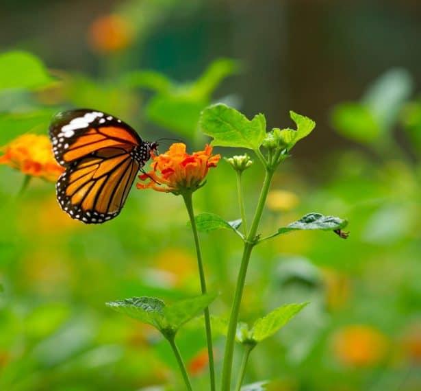 Welcome Garden Critters, Mindful Gardening