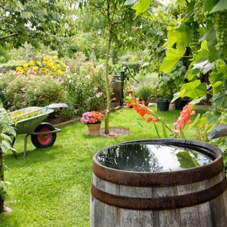 Why Are Rain Gardens Important?
