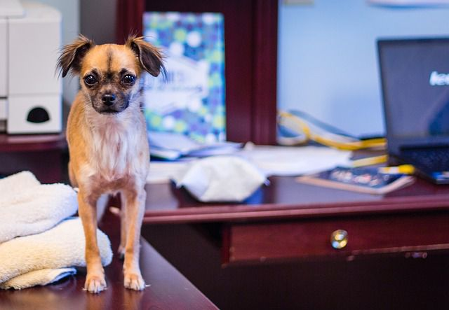 Pets in the Workplace Reduce Stress