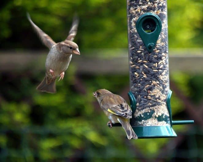 national bird day, bird day, birds, birding, bird feeder