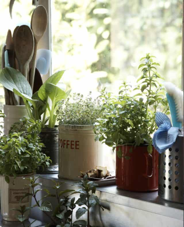 Indoor Garden in Winter Time, Mindful Gardening, Mindful Living Network