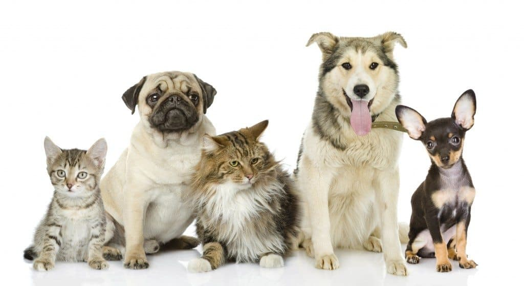 health benefits of being a pet owner, benefits of pet ownership, living with pets