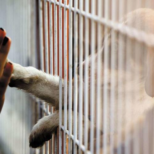 Myth Busting on Pet Adoptions