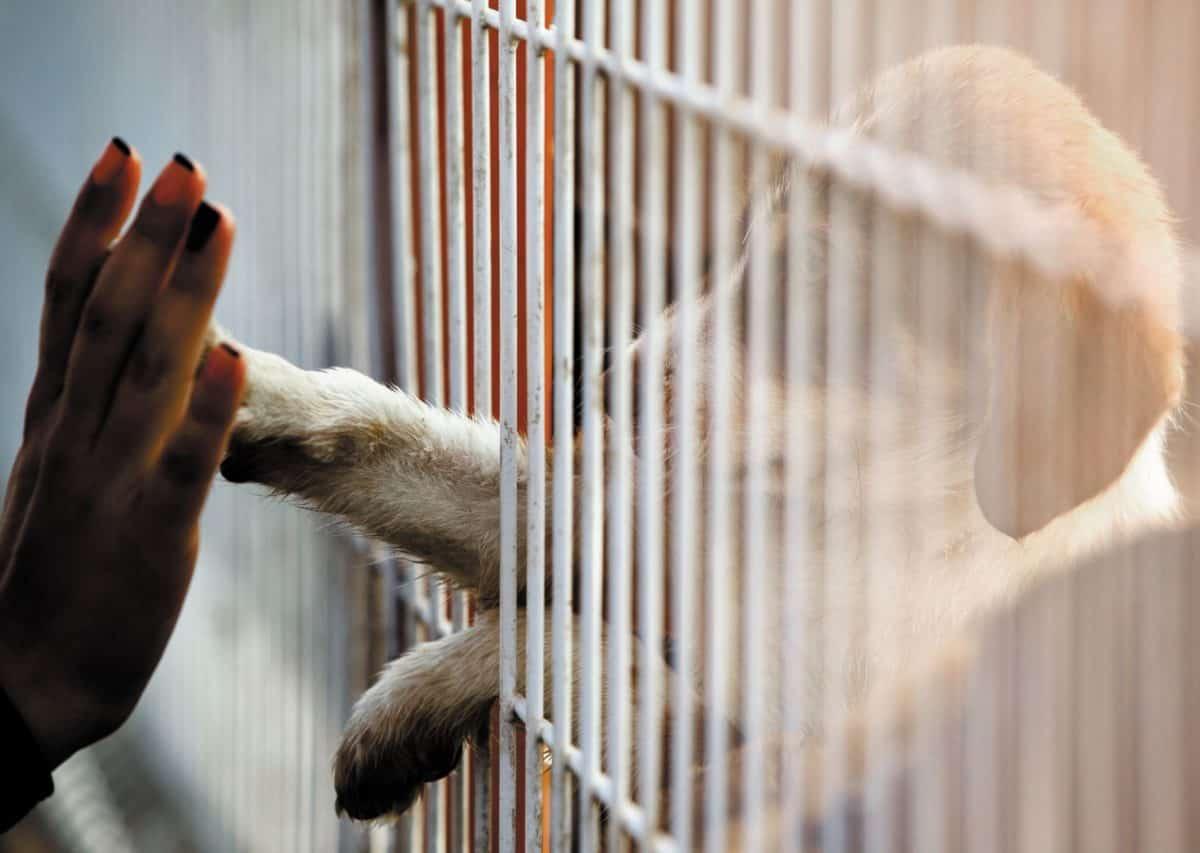 myth busting on pet adoptions, pet adoptions, adopt dont shop