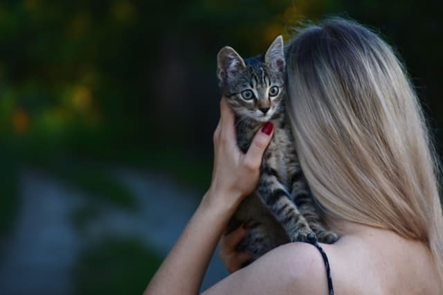 Cats and Their Owners Can Reduce Stress Together - Mindful
