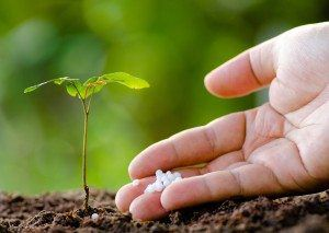 Close up Male hand giving plant fertilizer to young tree