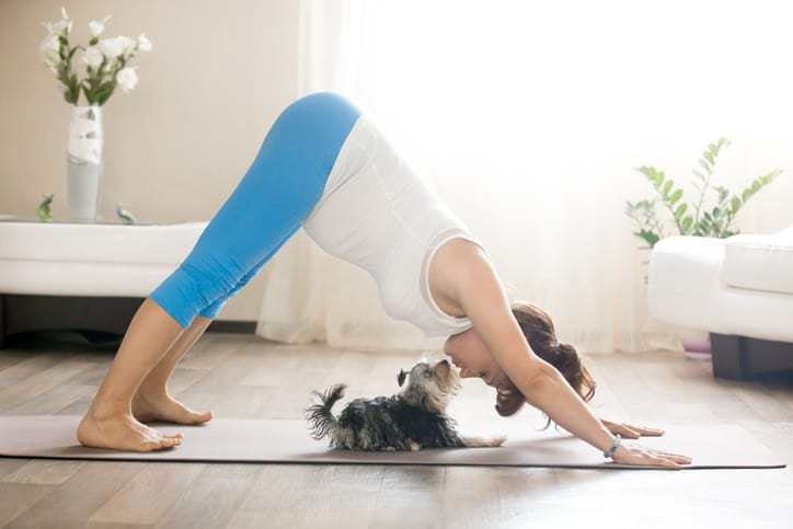 yoga for your pets, pet yoga, pet exercise, healthy pets