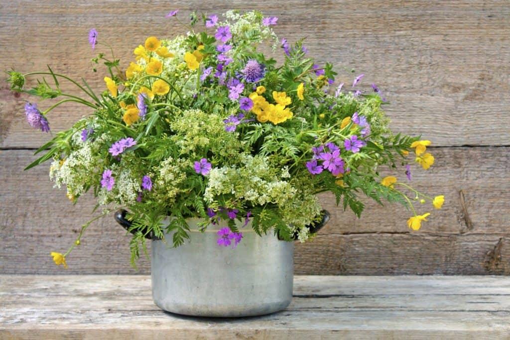 fresh flowers, wildflower, benefits of flowers