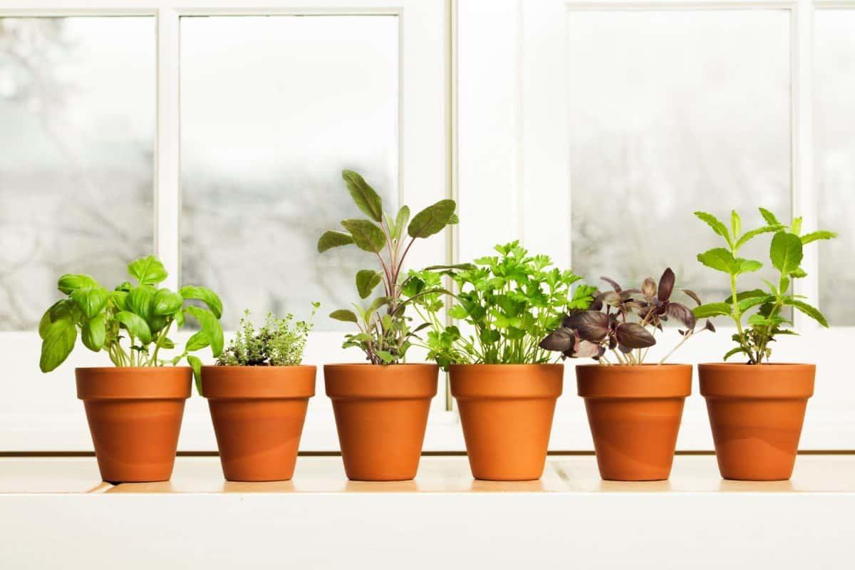 more herbs less salt day, fresh herbs