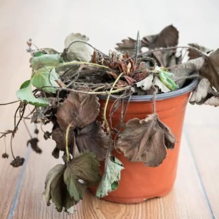 Plants Wilting? Change that Color!