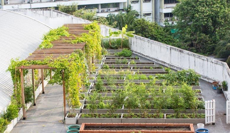 Rooftop Garden, Mindful Gardening