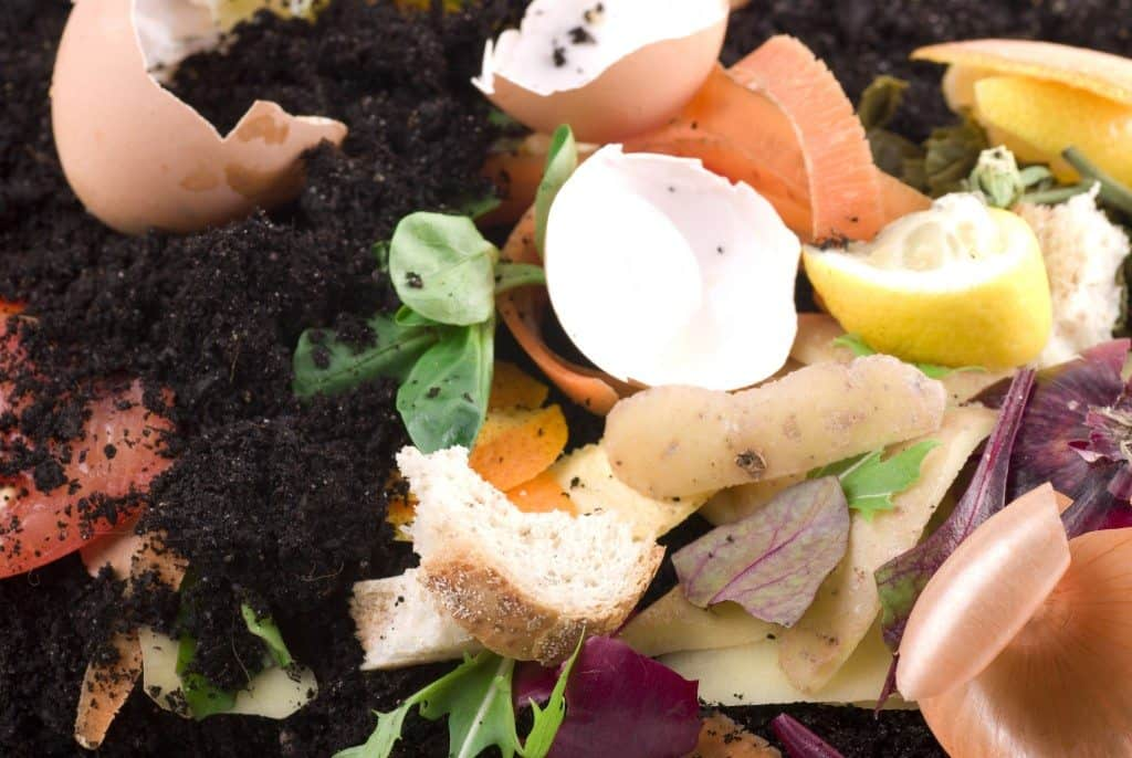 learn about composting day, compostable materials, recycling
