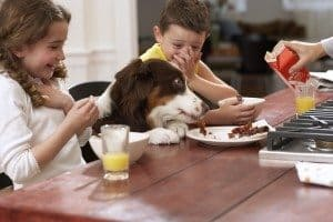 10 Toxic Table Scraps for Dogs and Cats