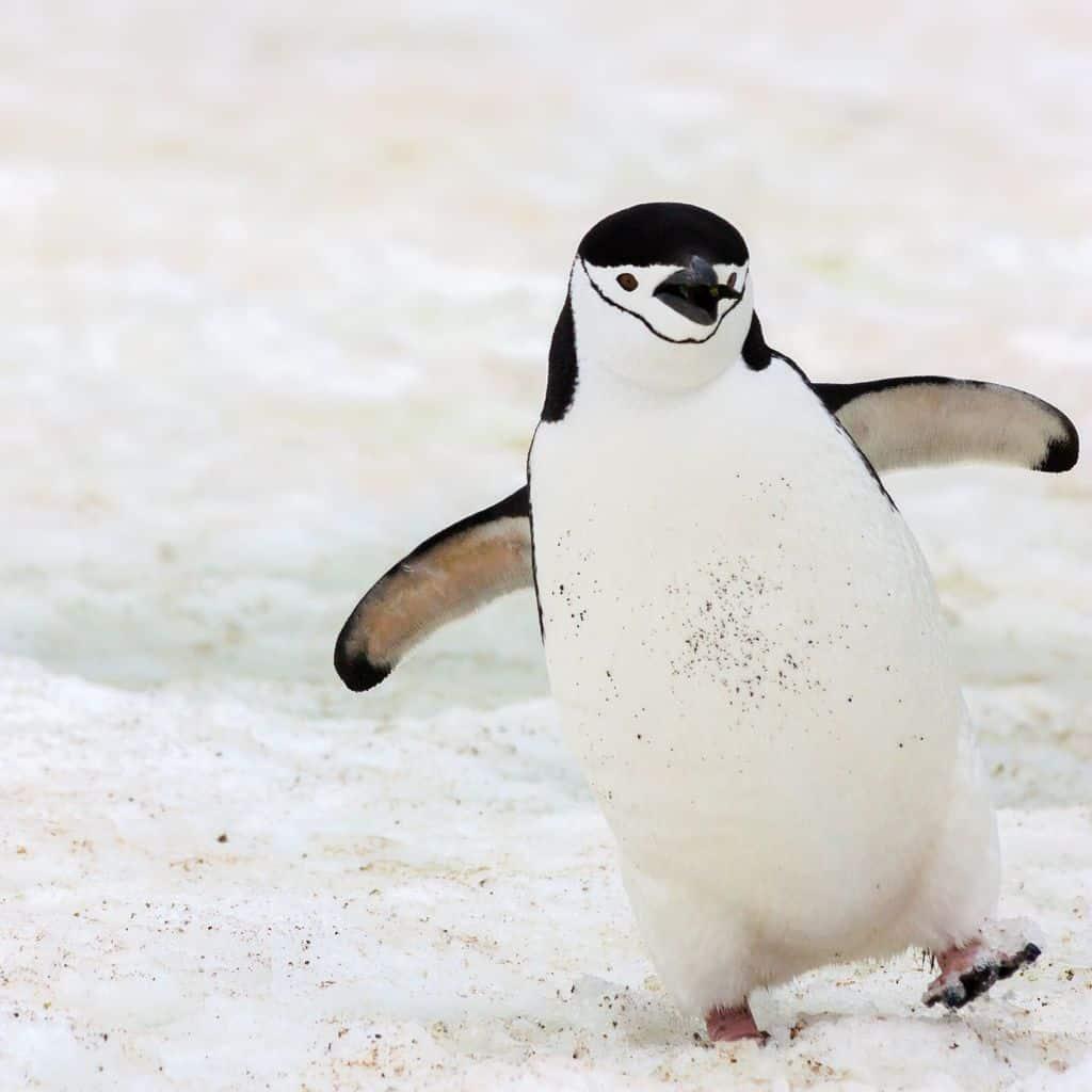 penguin awareness day, penguin awareness, penguin
