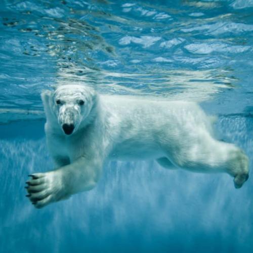 Protect the Polar Bears!