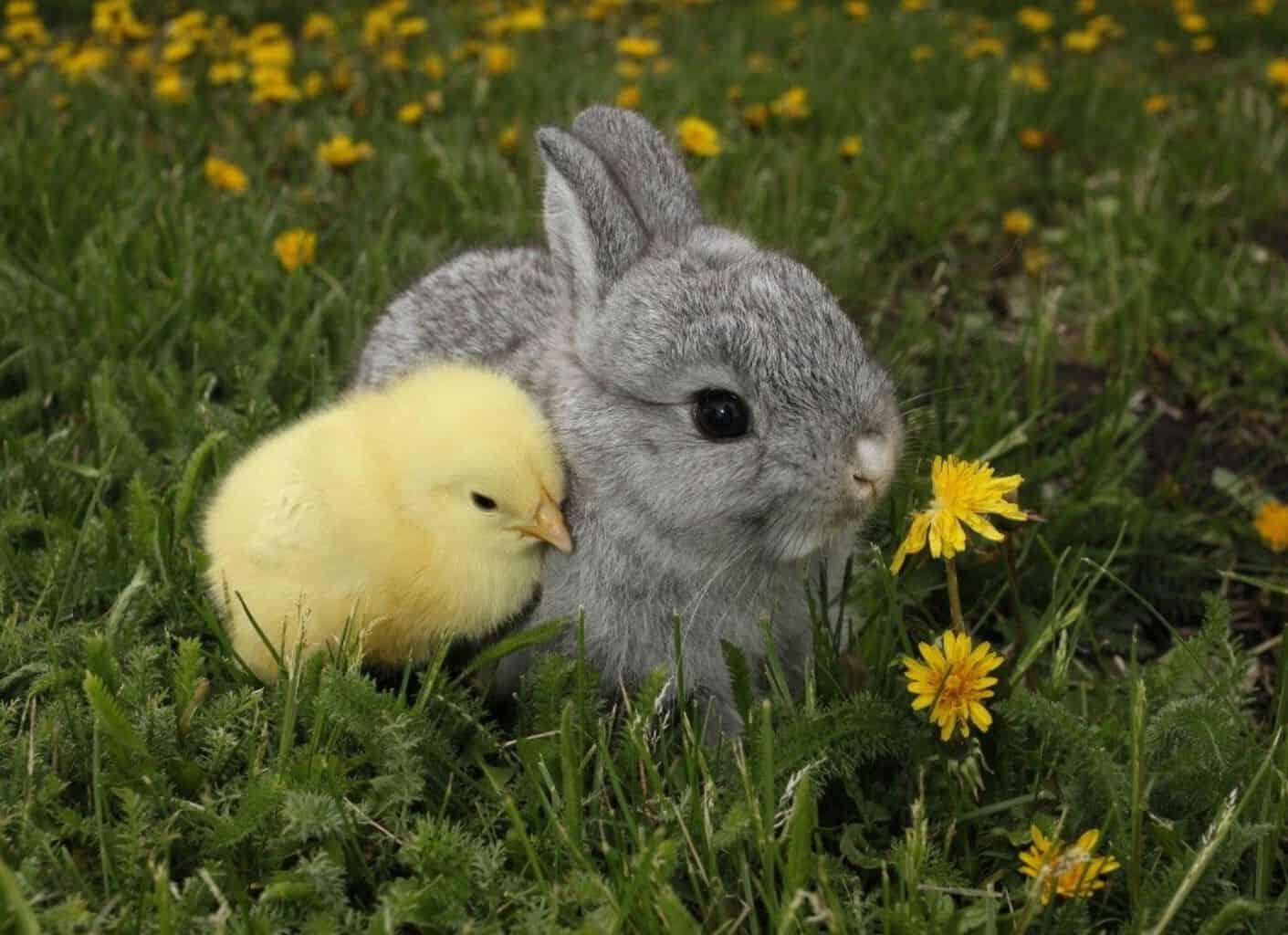 baby animals, cute animals