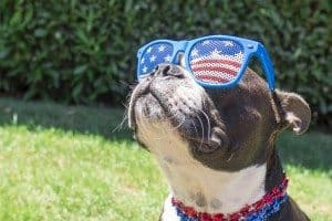 5 Fireworks Tips for Pets