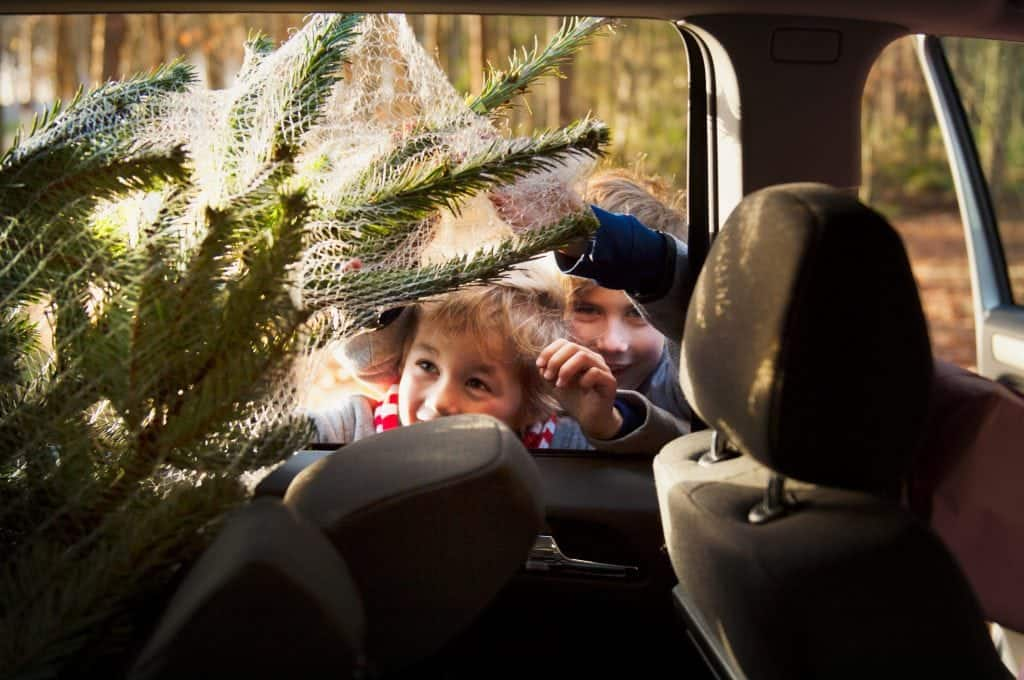 Be a reponsible christmas tree owner, Mindful Gardening, Mindful Living Network