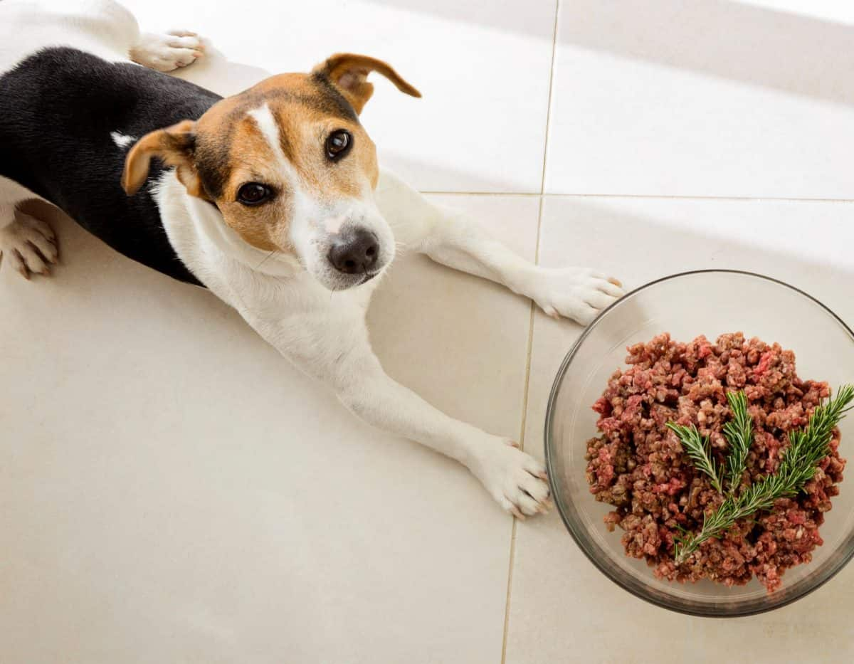 Homemade Pup Food in a Snap! - Mindful