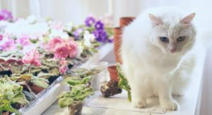 Build Your Own Indoor Cat Garden