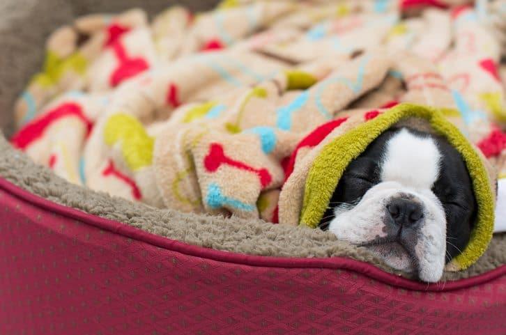 pet bed, diy pet bed, homemade pet bed, national pet bed