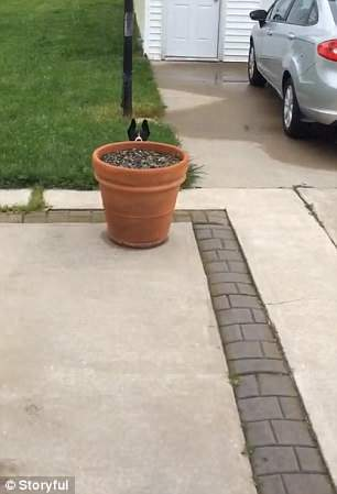 adorable dog playing hide and seek with owner