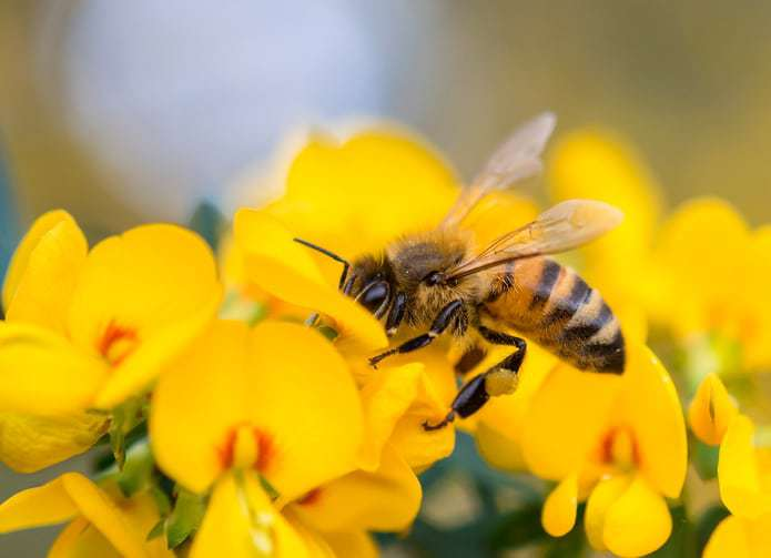 national honey bee day, bee day