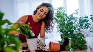 air purifying indoor plants, top indoor plants, plants reduce stress