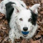 Chaser: The World's Smartest Dog