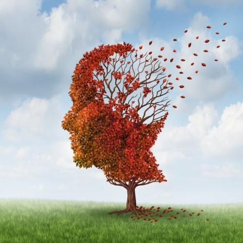 Reverse Brain Aging Now