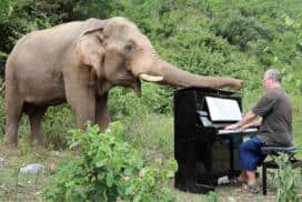 Piano for Elephants