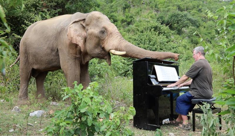 Piano for Elephants