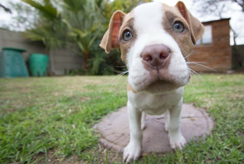Breed-Specific Legislation in the U.S.