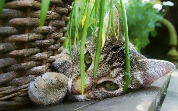 Build Your Own Indoor Cat Garden